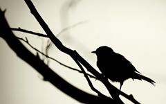 https://marlonpalmas.files.wordpress.com/2010/01/01649_silhouet.jpg
