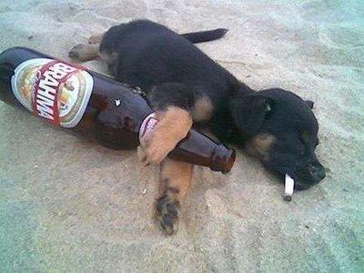 http://marlonpalmas.files.wordpress.com/2010/01/cachorro-bebado-na-praia.jpg