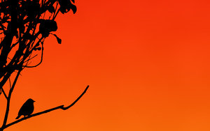 http://marlonpalmas.files.wordpress.com/2010/01/silhouetted_sparrow_wallpaper_by_kem2000.jpg?w=480