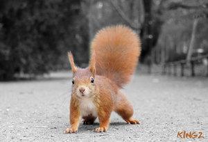 https://marlonpalmas.files.wordpress.com/2010/01/squirrel_by_kingoz.jpg